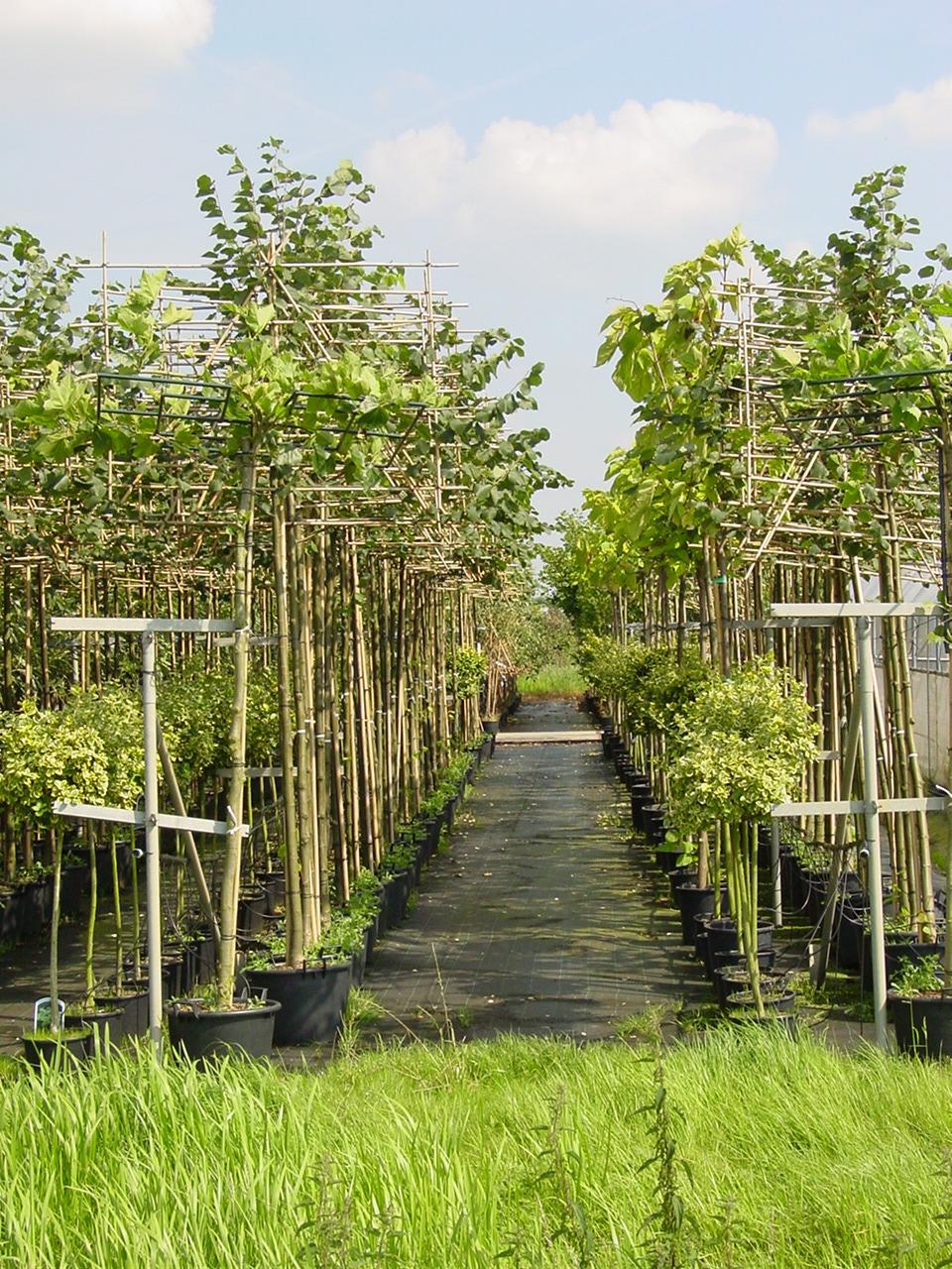 CLMfruitteelt-en-boomkwekerij-16-Boomteelt