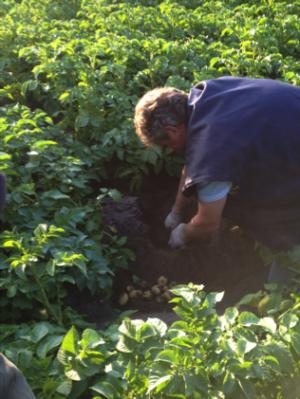 SchoonWater aardappels