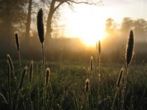 SchoonWater-Graspluimen