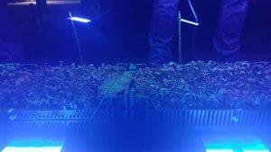 Met blacklight geeft Delphy een goed beeld van indringing en bedekking van het gewas bij gebruik van verschillende spuitdoppen en waterhoeveelheden.
