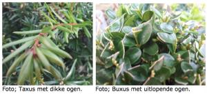 Taxus en buxus
